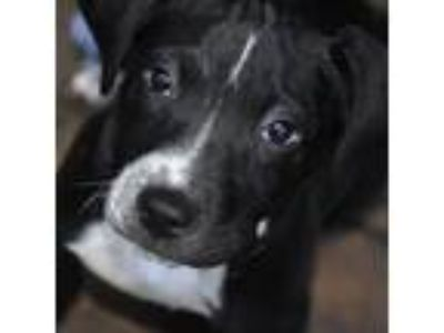 Adopt Dottie a Mixed Breed