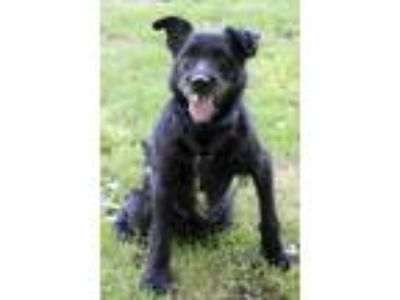 Adopt Apollo a Black Terrier (Unknown Type, Small) / Mixed dog in Waldorf