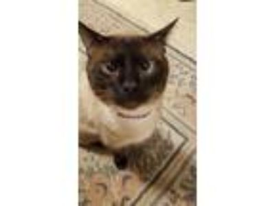 Adopt Dinah a Tan or Fawn (Mostly) Siamese cat in Sarah, MS (25655486)