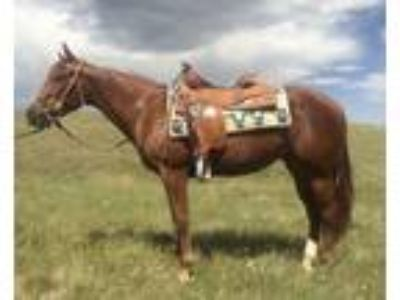 Great Minded FillyRanch VersatilityShowTrail