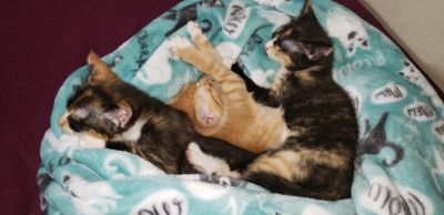 3 Free kittens