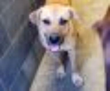 Reese Hound Dog