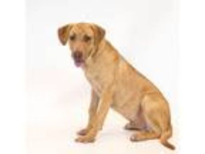 Adopt Jasper a Mixed Breed