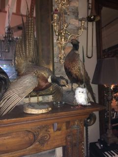 Part 2 of Huge Victorian Estate Sale!
