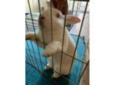 Adopt Frosty a Bunny Rabbit