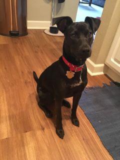 Adopt Bella!