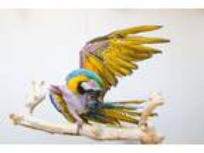 Adopt Zeco a Macaw