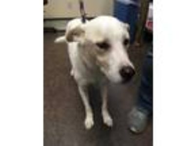 Adopt Peyton a White Mixed Breed (Medium) / Mixed dog in Land O'Lakes