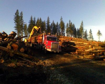 Timber Logging TREES, 1-800-LOG ALOT, Clinton, Whidbey Island, Oak Harbor Loggers