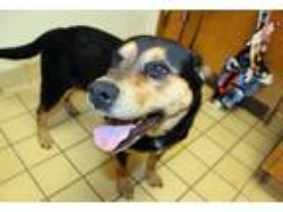 Craigslist Animals And Pets For Adoption Classifieds In Bladenboro