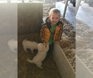 Great Pyrenees PUPPY FOR SALE ADN-130606 - Puppies from organic dairy and poultry farm