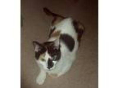 Adopt Poppy a Calico or Dilute Calico Calico / Mixed cat in McKinney