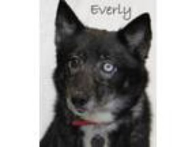 Adopt Everly a Husky