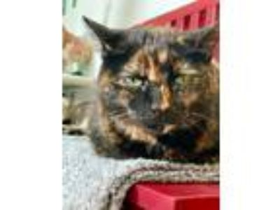 Adopt Tinkerbell a Domestic Shorthair / Mixed (short coat) cat in Logan