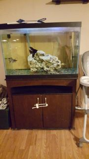 50 gallon tank with everything