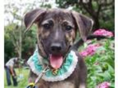Adopt Joe a Shepherd, Terrier