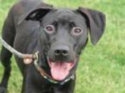 Adopt Spooky a Black Mixed Breed (Large) / Mixed dog in Georgetown