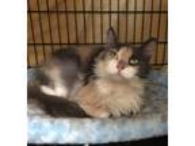 Adopt Ethel a Domestic Short Hair