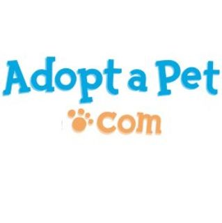 Bunnies and Guinea Pigs available to adopt