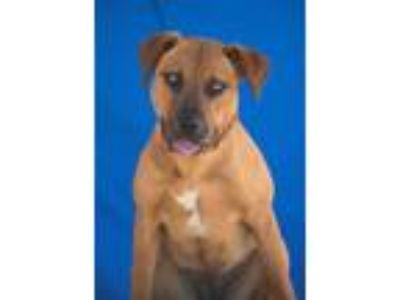 Adopt Ginger a Mixed Breed