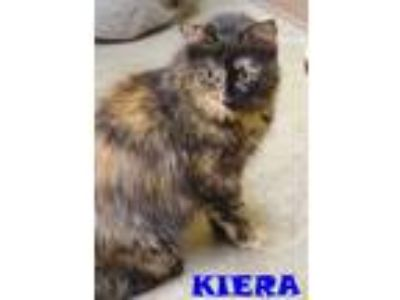 Adopt KIERA a Domestic Medium Hair