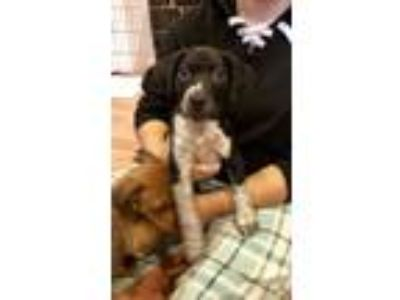 Adopt Cortez a Mixed Breed