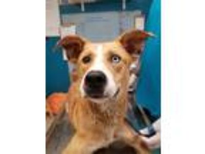 Adopt Booger a Mixed Breed