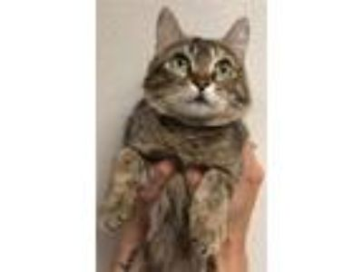 Adopt Ruth a Domestic Short Hair