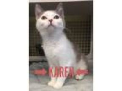 Adopt Karen a Domestic Medium Hair