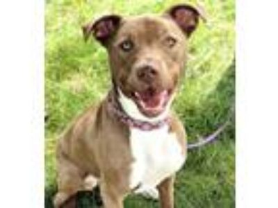 Adopt Roo-Foster needed! a Brown/Chocolate - with White Terrier (Unknown Type