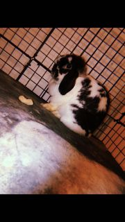 1 male and 1 female bunny