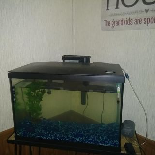 30 gallon fish aquarium with led lighted hoid heater pump and air bubbler and stand