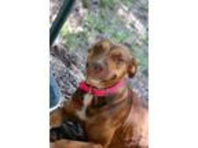 Adopt Poppy a Mountain Cur