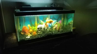 50 gallon fish tank with all supplies and fish!