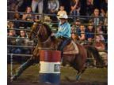 12 Year Old Barrel Horse