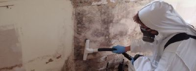Mold Specialist! Licensed and Insured! Mold never back with fully satisfaction guarantee