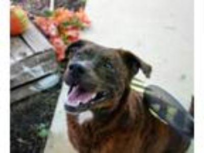 Adopt Brandy a Mixed Breed
