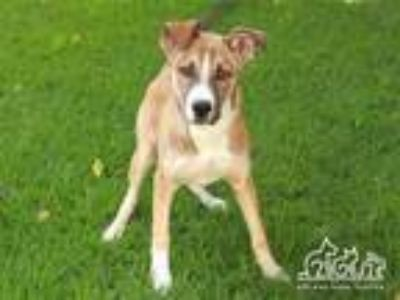Adopt LISA a German Shepherd Dog, Mixed Breed