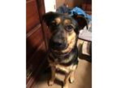 Adopt Lucy Anna Fontenot a Black - with Tan, Yellow or Fawn German Shepherd Dog