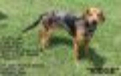 Ridge Hound Dog