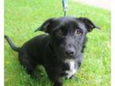 Adopt Pumba a Terrier, Mixed Breed