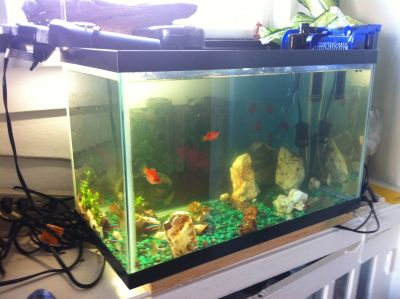 10-gallon fish tank: complete functioning setup + 4 small fishies