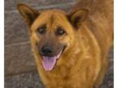 Adopt PRECIOUS a German Shepherd Dog, Mixed Breed