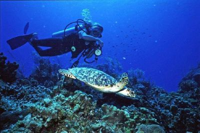 Enjoy Diving At The Best Grand Cayman Dive Sites