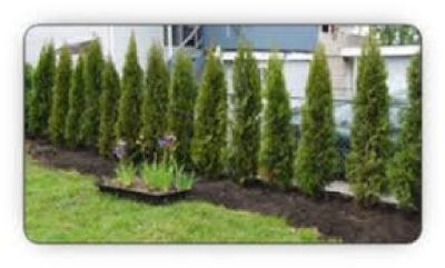 Plant a tree hedge around your home