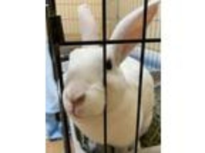 Adopt Tegan a Bunny Rabbit