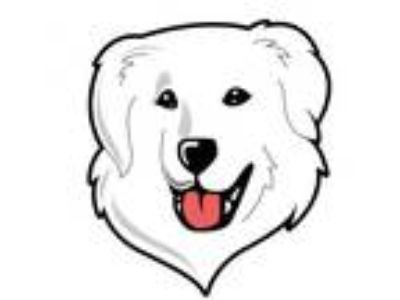 Adopt Shelley a Great Pyrenees