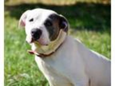 Adopt Rosie (Tink) a Pit Bull Terrier / Mixed dog in Kingsland, GA (25313573)