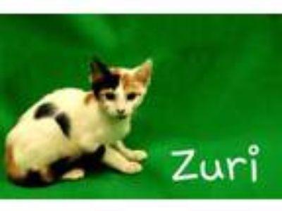 Adopt Zuri G31 7-19-19 a White Domestic Shorthair / Domestic Shorthair / Mixed