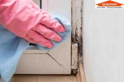 Commercial Mold Removal Mansfield MA